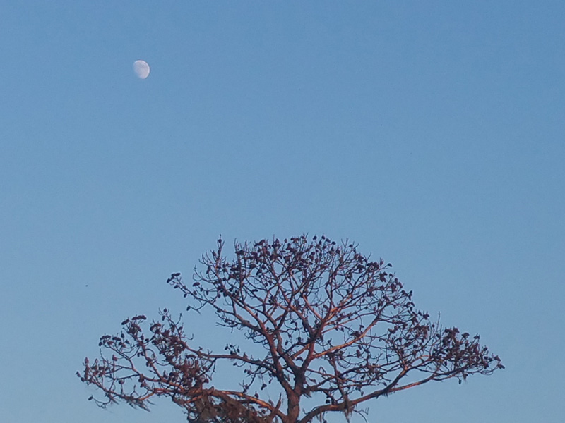 A moment caught in time, a view over a nearby tree with the moon, highlighted by the sun, caught in the upper frame.