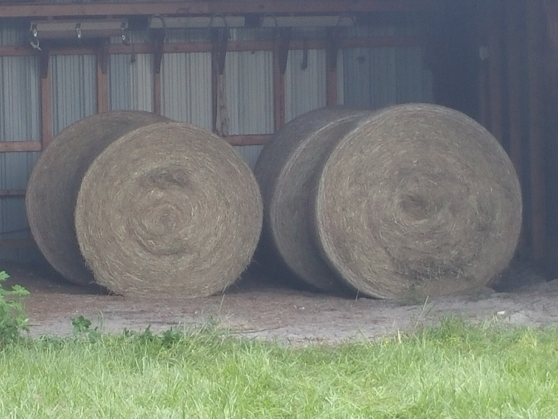 Our own hay, baled and stored for later use.