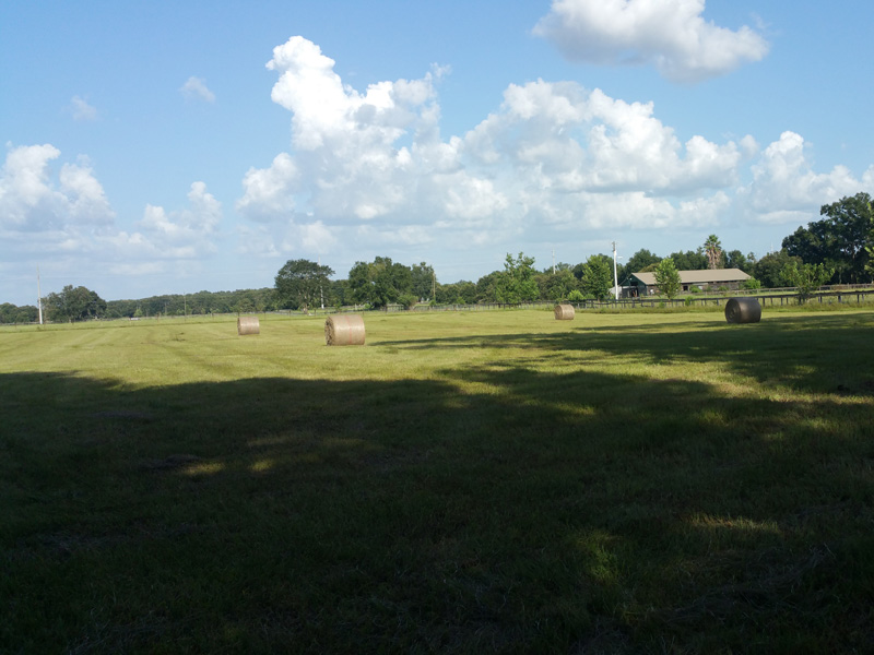 The large pasture to the front of our property after being baled last year.