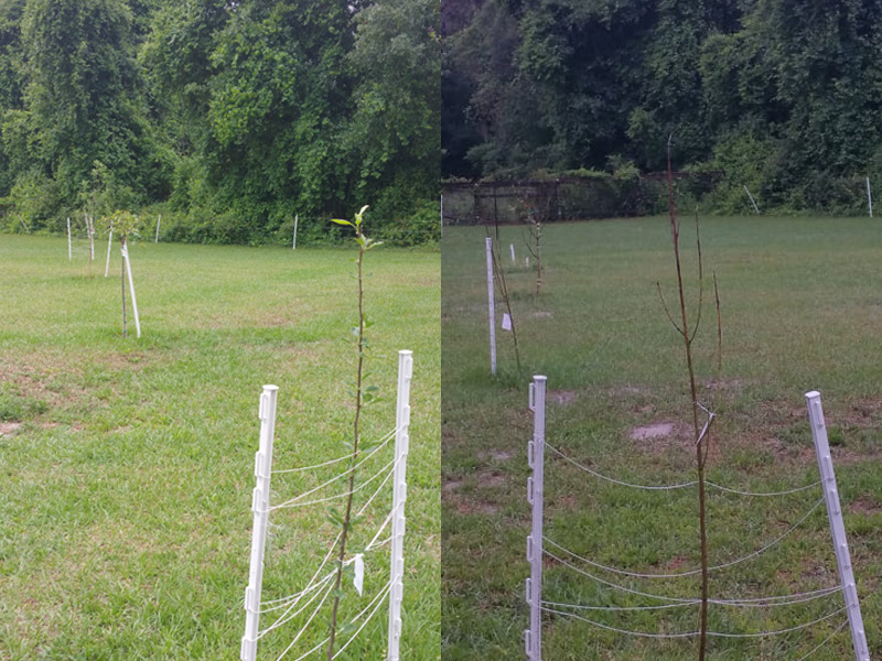 The left and right sides of our orchard, currently supporting apple, peach, pear and persimmon trees.